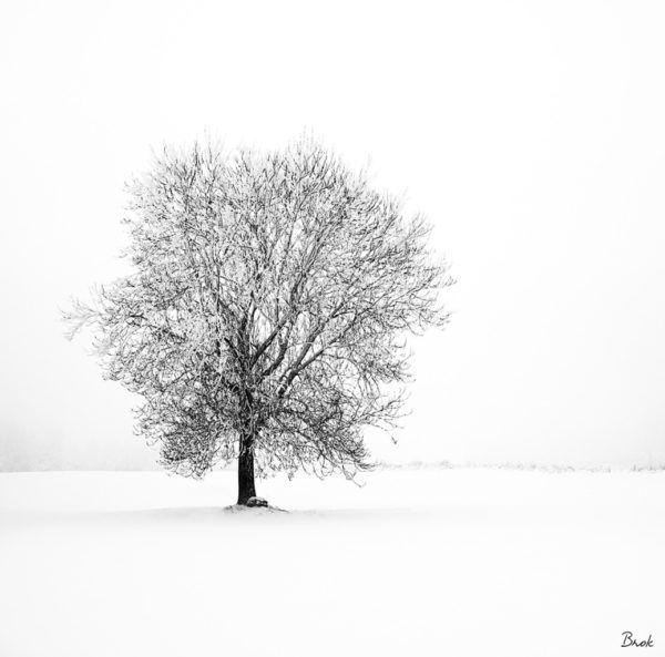 Arbre-solitaire-dans-la-neige-Par BrOk