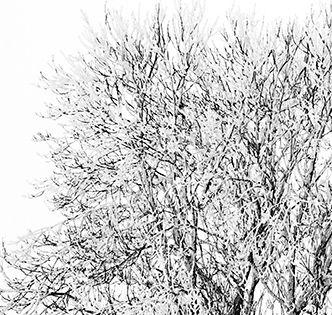 Arbre-solitaire-dans-la-neige-Par BrOk-Détail1