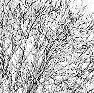 Arbre-solitaire-dans-la-neige-Par BrOk-Détail2