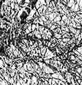 Arbre-solitaire-dans-la-neige-Par BrOk-Détail5